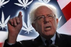 Bernie Sanders Introduces Bill in US Senate to Legalize Marijuana