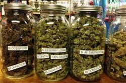 Annoying Things about Buying Recreational Weed