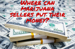 Denver's Marijuana Money: Can it be too much of a good thing?