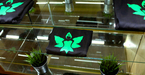 small_wide_emerald_fields-11
