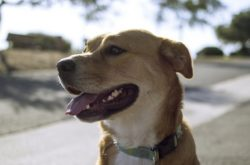 Is It Safe to Give CBD Oil to Dogs?