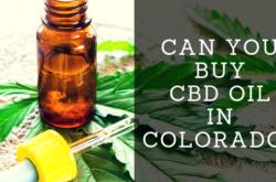 Can You Buy CBD Oil in Colorado?